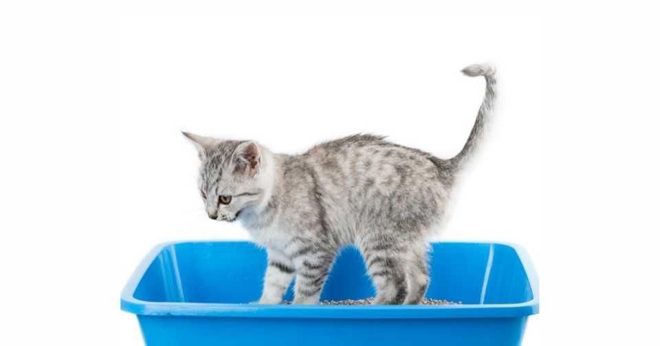 【何日からが便秘!?】猫の便秘対策【獣医師監修】