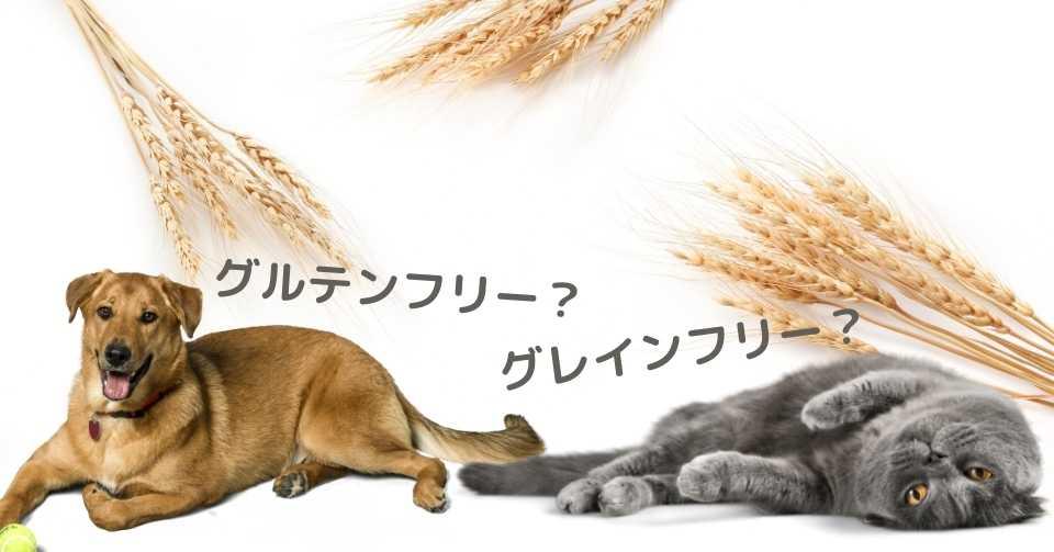 【グレインフリーって良いの?】穀物とペットの健康について【獣医師監修】