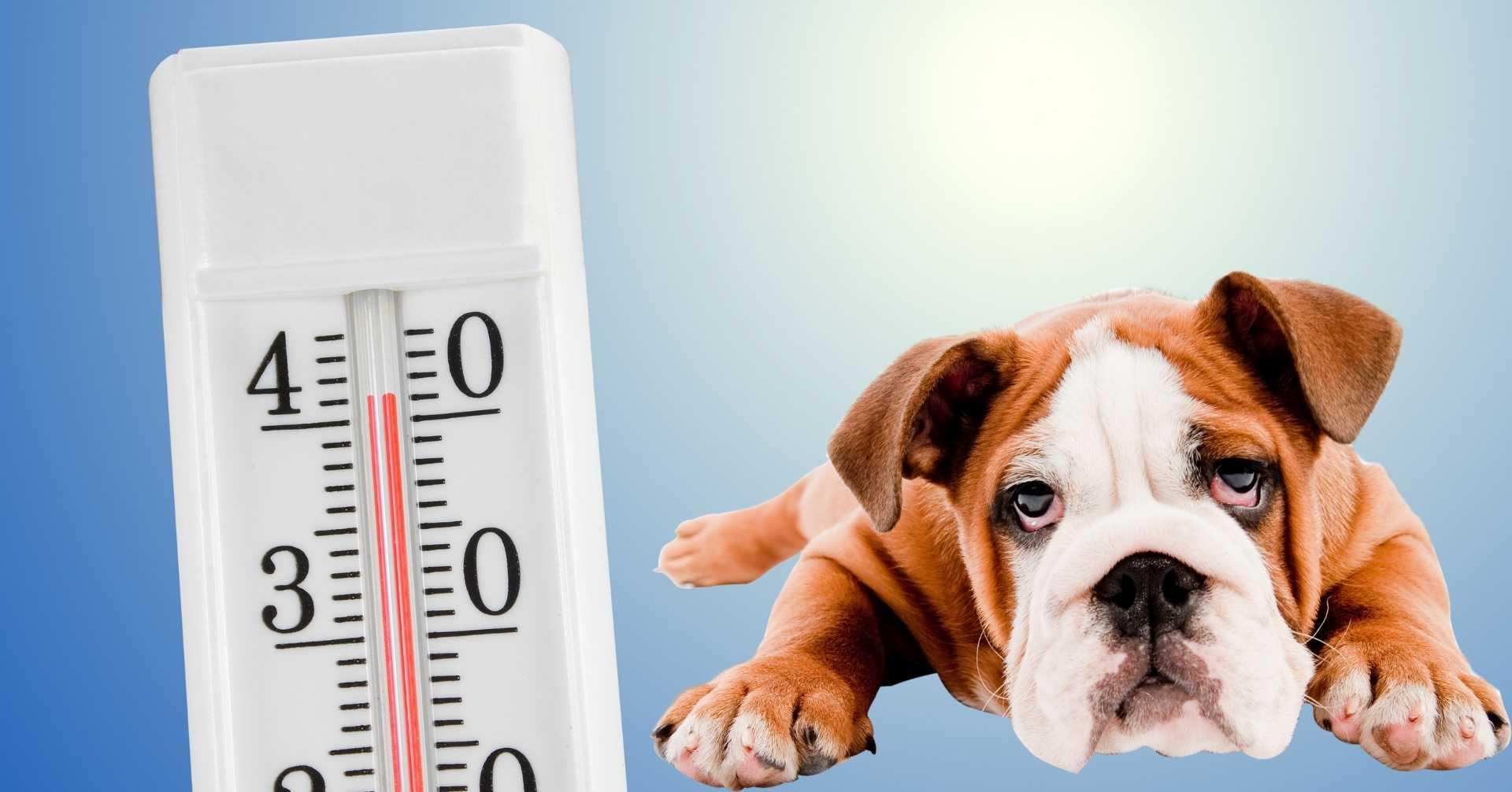 【夏の食欲不振】愛犬がご飯を食べない原因と対策【獣医師監修】