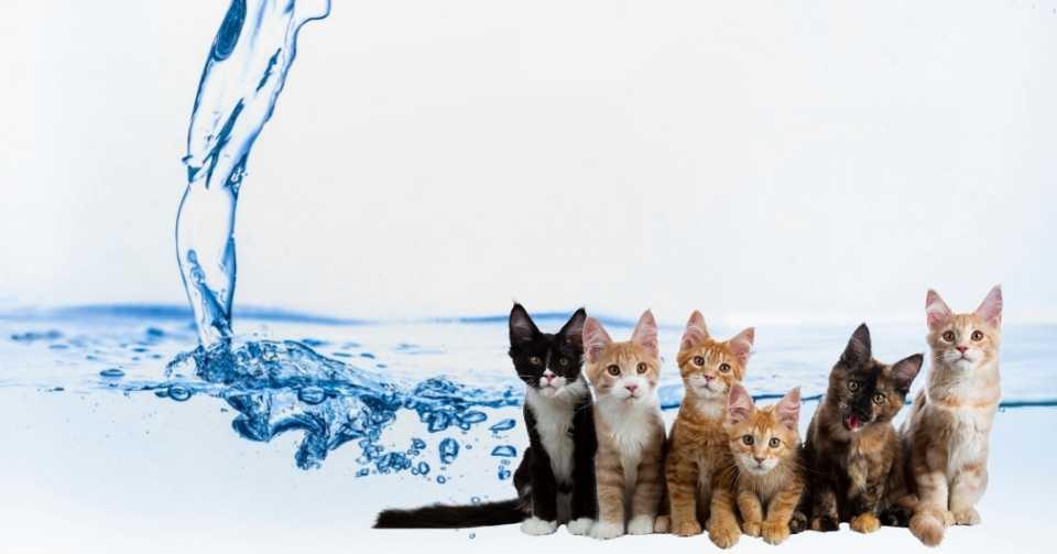 【必読】水分と病気のリスク