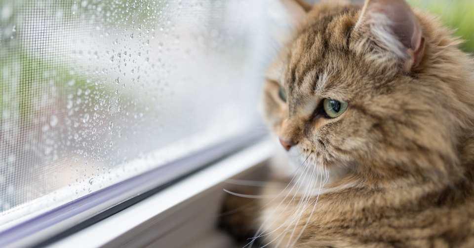【猫は湿気が苦手!】梅雨の湿気によるカビ・ダニ対策