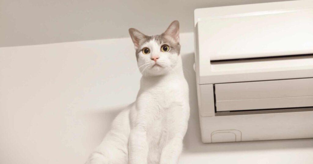 猫とエアコン