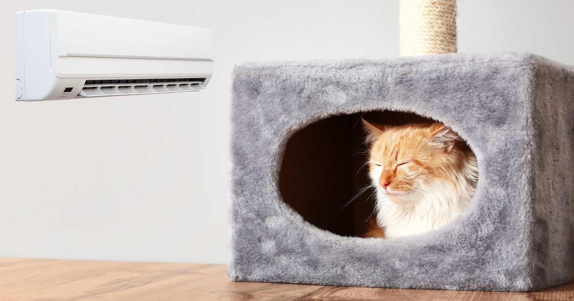 【夏のシーズン到来!】留守番時の猫とエアコンについて【獣医師監修】