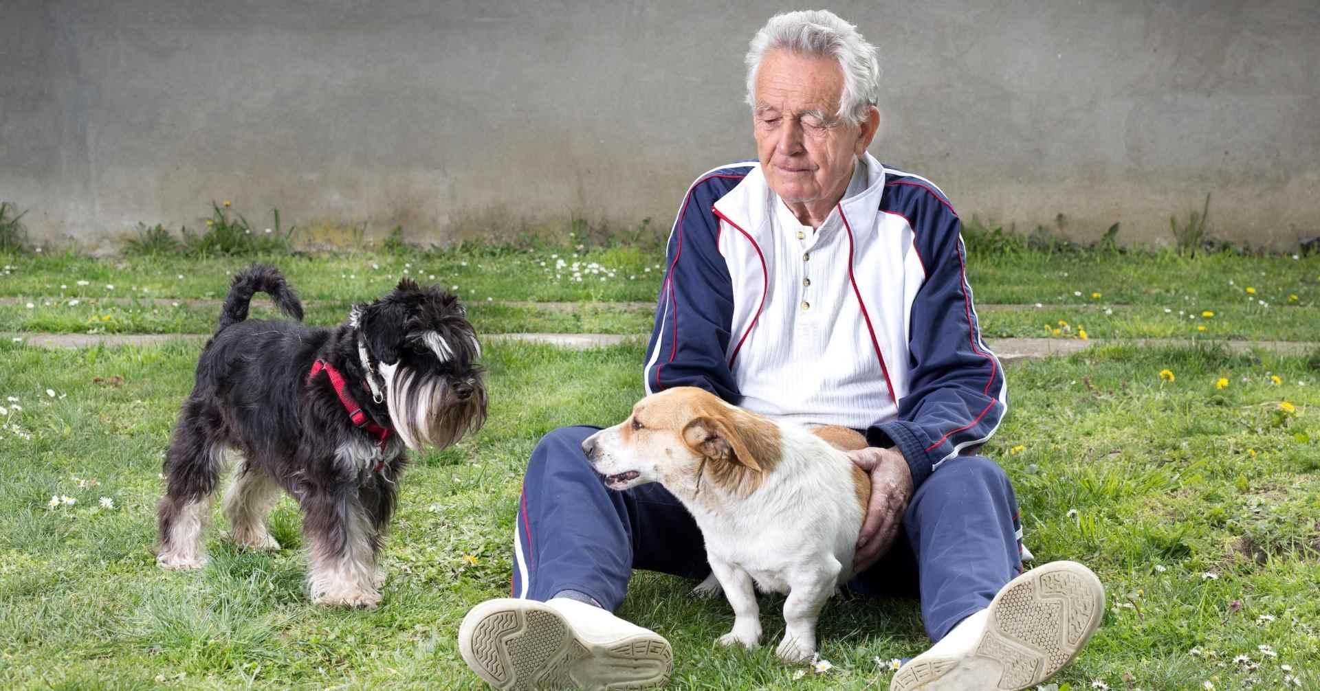 【犬の1歳は人の31歳!?】最新研究から知る犬の歳の取り方