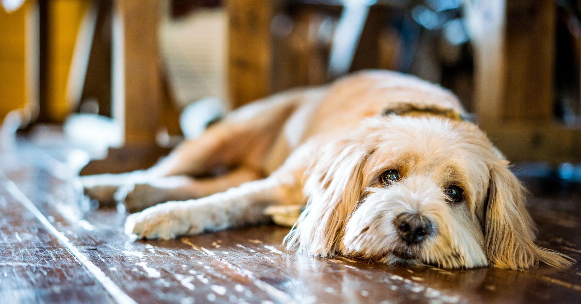 【見逃しがち!?】夏バテを見分ける愛犬のサイン