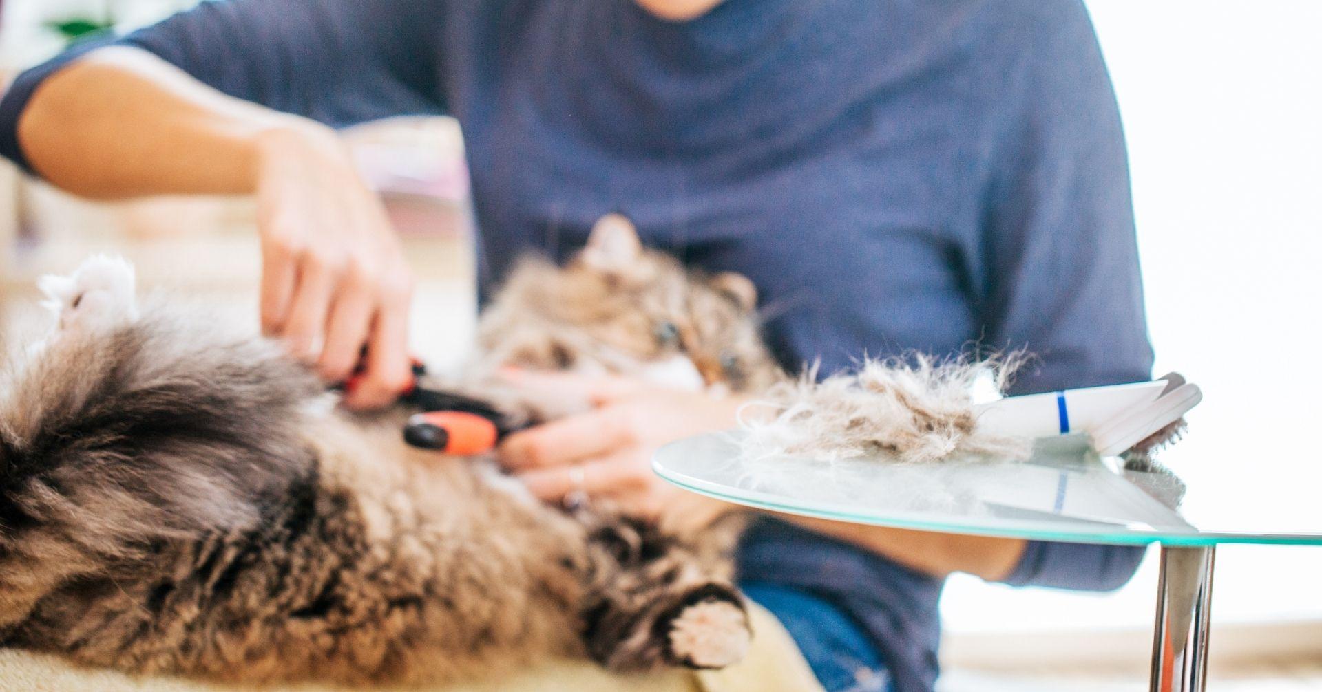 【猫の豆知識】季節による毛の生え替わり