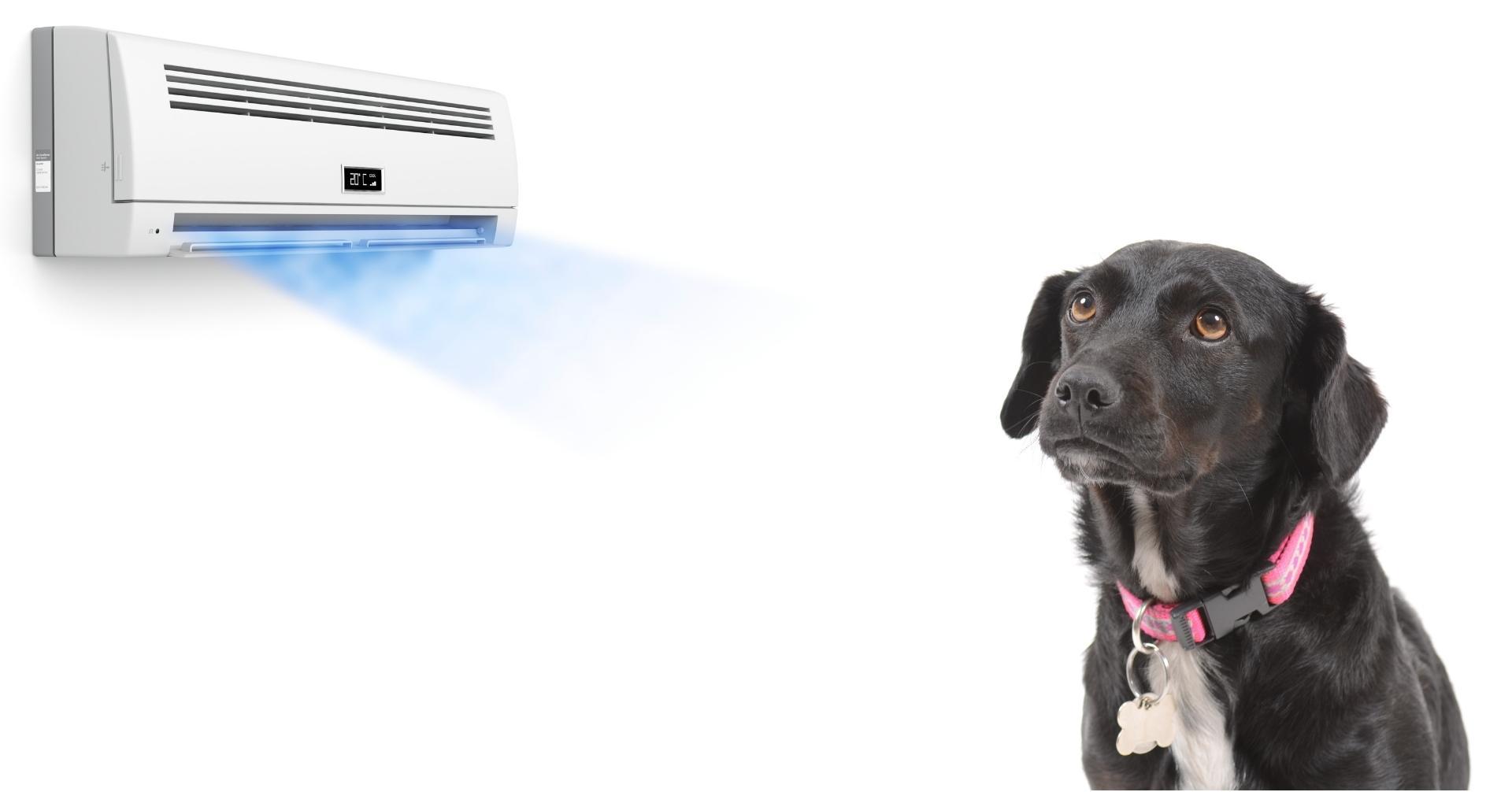 【夏のシーズン必見】愛犬が快適に過ごせる冷房 (クーラー) 設定について
