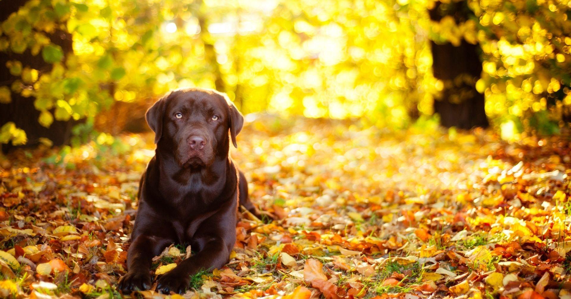 【夏から秋に向けてチェック!】季節の変わり目に注意すべき愛犬の不調