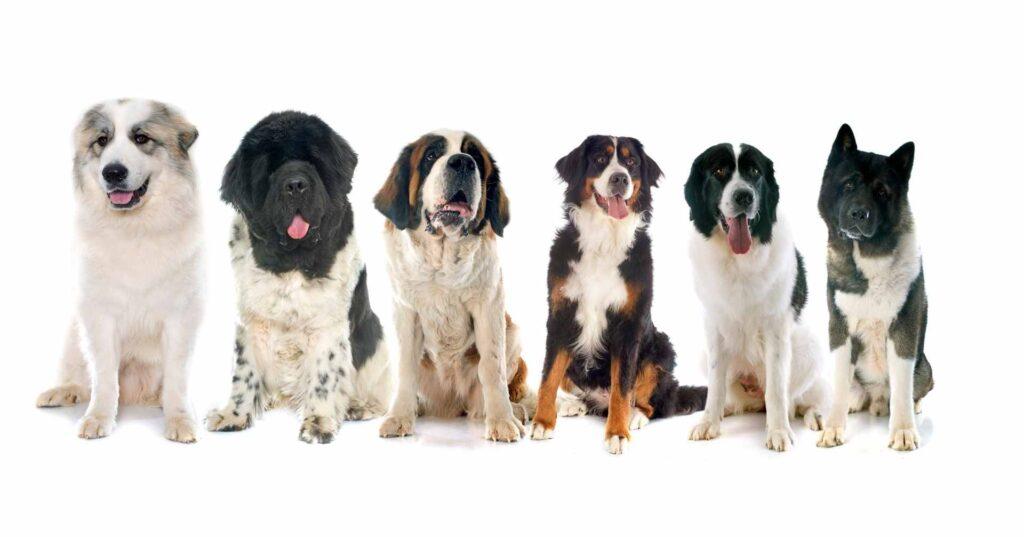 犬種別の平均寿命