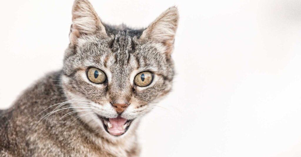 猫の空腹時のサイン
