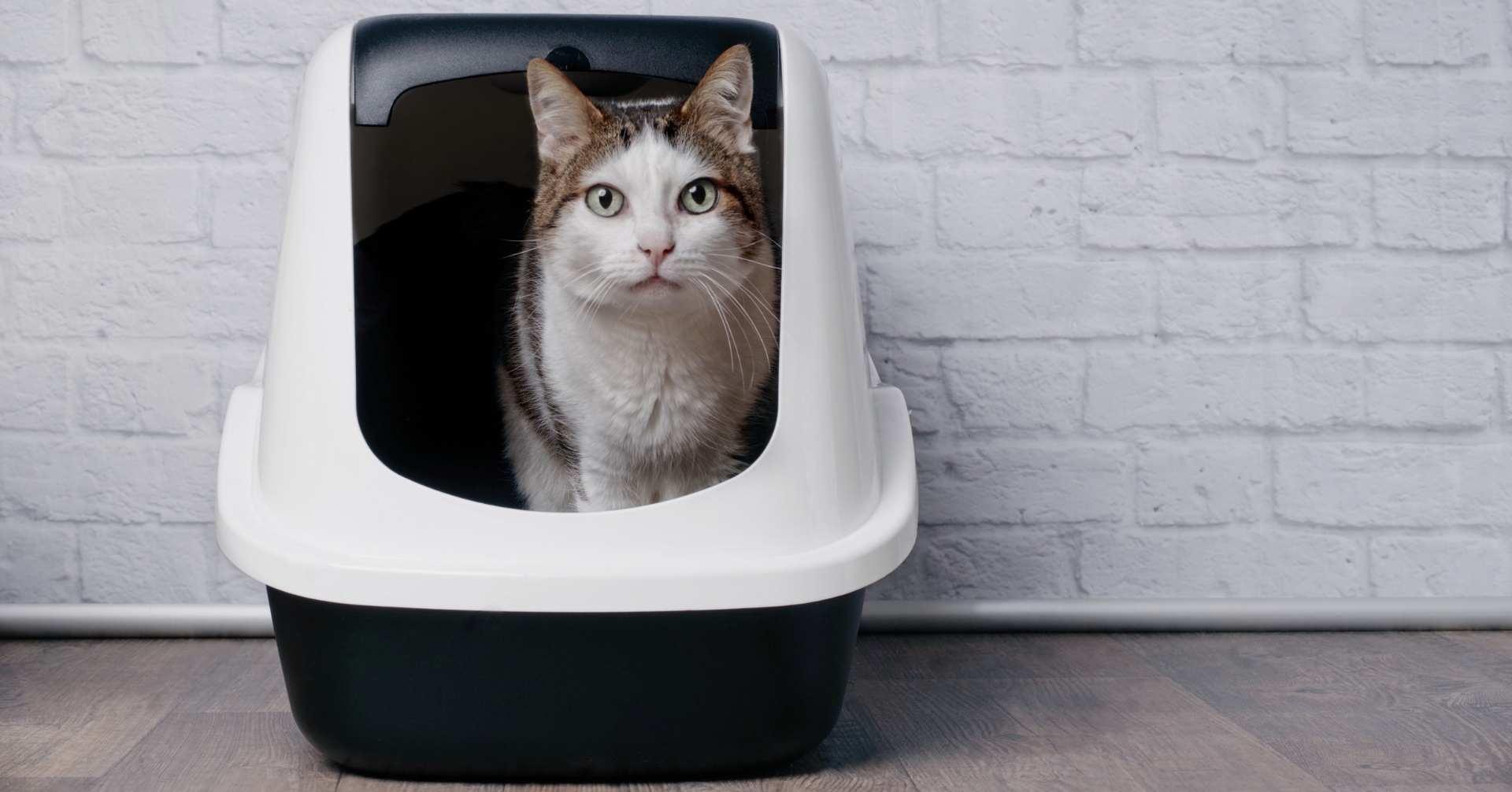 【実は意外な原因も】猫の便秘について原因や対策をご紹介